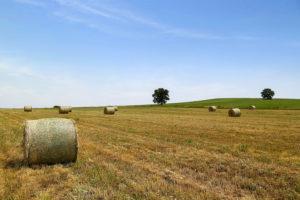 fields_2